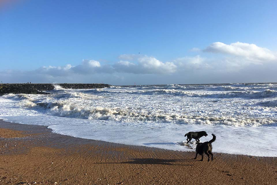 2 dogs on a beach, waves crashing behind